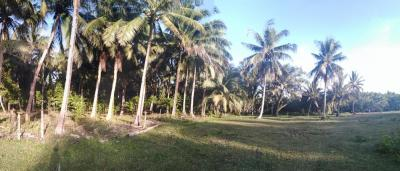 500 sqm Siargao Lot For Sale Near the Beach